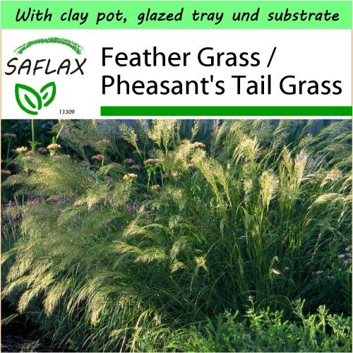 SAFLAX Garden to Go - Feather Grass / Pheasant's Tail Grass - Stipa - 50 seeds