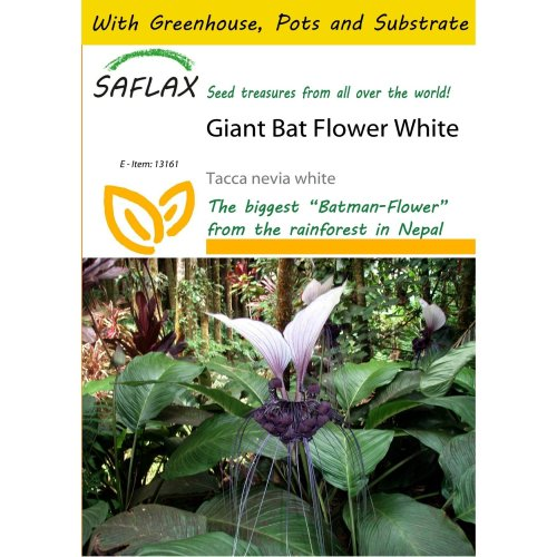 Saflax Potting Set - Giant Bat Flower White - Tacca Nevia White - 10 Seeds - with Mini Greenhouse, Potting Substrate and 2 Pots