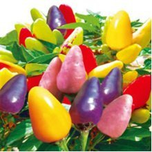 50pcs Mix Color Pepper Seeds Chili Pepper Vegetable Seeds Garden Decoration Bonsai Plant