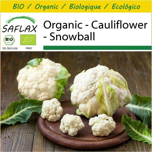 SAFLAX Potting Set - Organic - Cauliflower - Snowball - 70 certified organic seeds  - Brassica