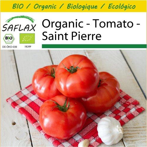 SAFLAX Potting Set - Organic - Tomato - Saint Pierre - 15 certified organic seeds  - Solanum