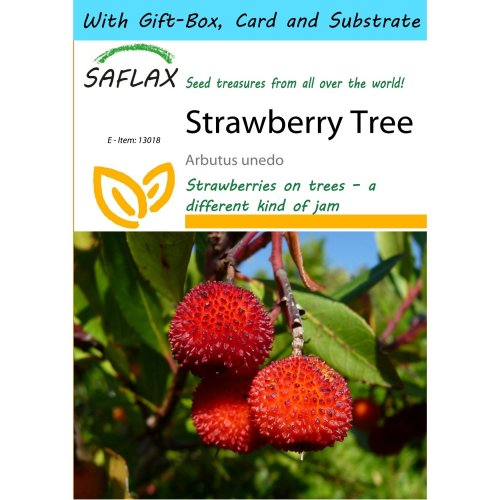 Saflax Gift Set - Strawberry Tree - Arbutus Unedo - 50 Seeds - with Gift Box, Card, Label and Potting Substrate