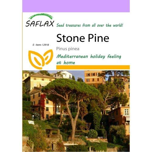 Saflax  - Stone Pine - Pinus Pinea - 6 Seeds