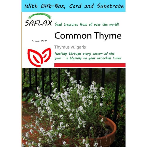 Saflax Gift Set - Common Thyme - Thymus Vulgaris - 200 Seeds - with Gift Box, Card, Label and Potting Substrate
