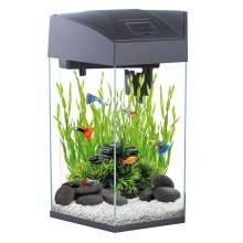 Fish R Fun, Hexagonal Fish Tank 21.6L Graphite Colour