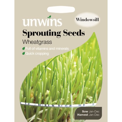 Unwins Pictorial Packet - Sprouting Seeds Wheatgrass - 400 Seeds