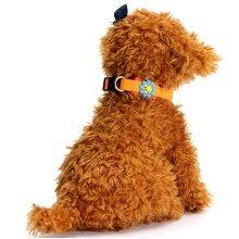 Pet Waterproof Glow LED Light Up Collars Flash Night Adjustable Dog Cat Safety Nylon